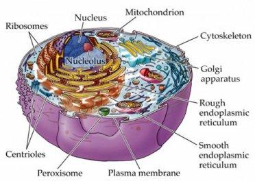 Electrode Plasma Electrons Cells