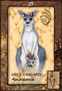 Grey Kangaroo Dreaming Oracle Cards