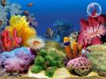 Pendant in your aquarium