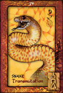 Snake Dreaming Oracle Cards