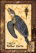 Turtle Dreaming Oracle Cards
