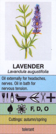 Sample Extract from the Herbs Mini Chart